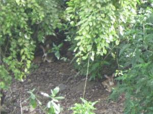 bambi-vive-alli1